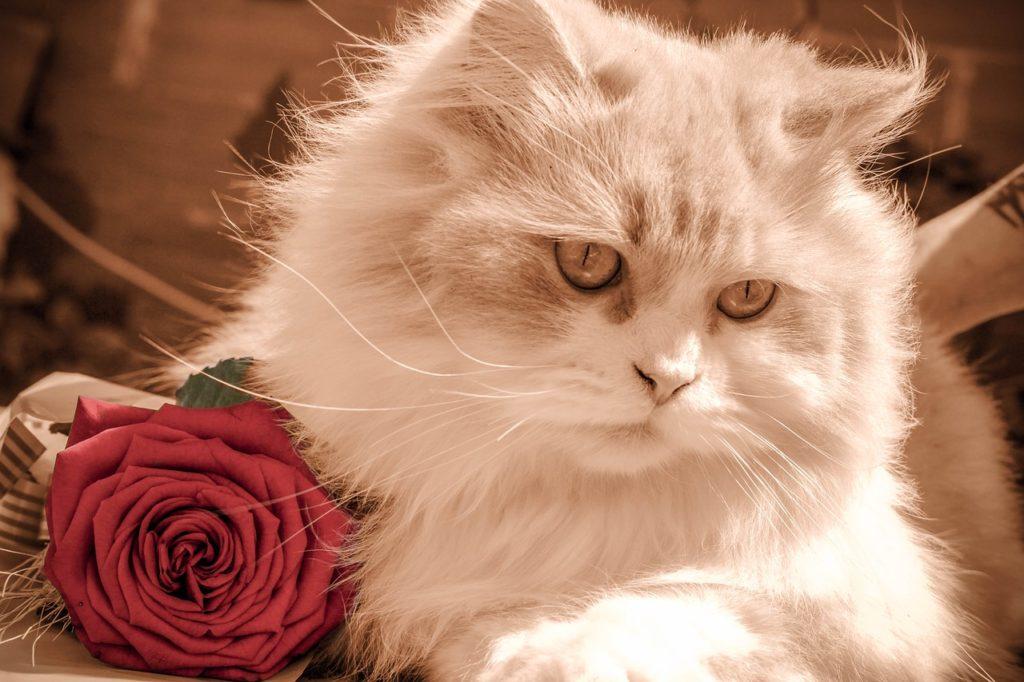kitten-1807071_1280-1