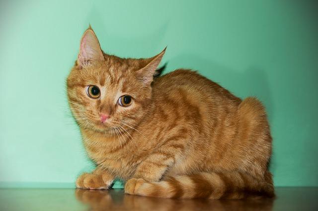 cat-1090577_640