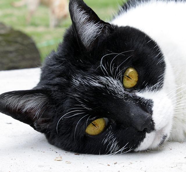 cat-1327815_640