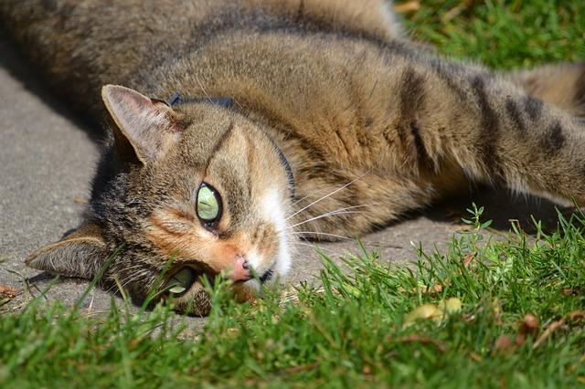 cat-1580240_640