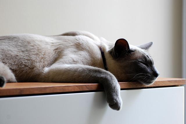 cat-1582873_640
