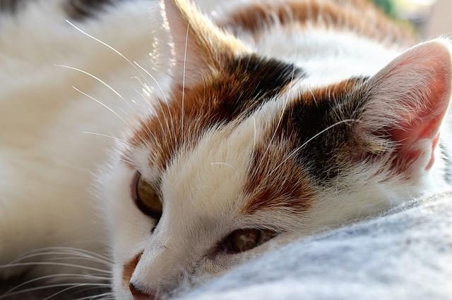 cat-1630753_640