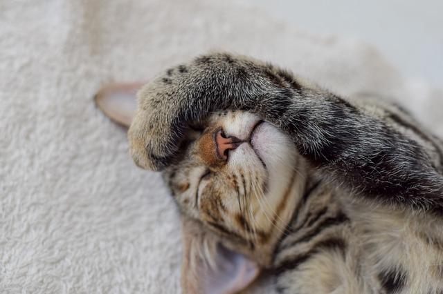 cat-1912251_640
