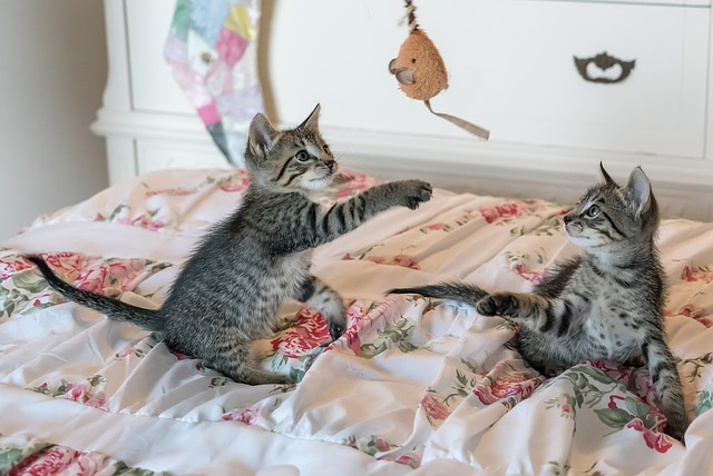 kittens-1534085_640