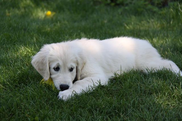 puppy-978193_640