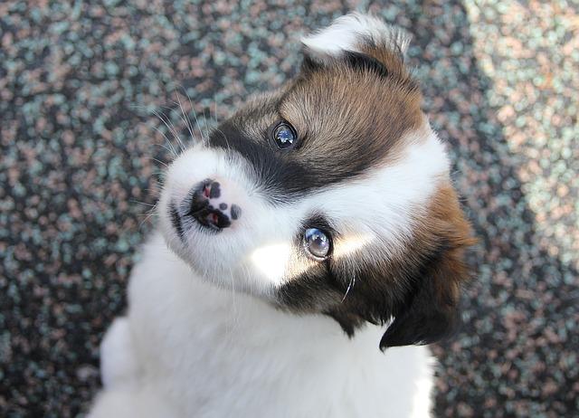 dog-1132304_640