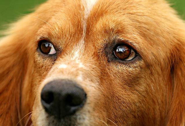 dog-1530644_640