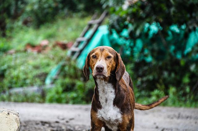 dog-1690824_640