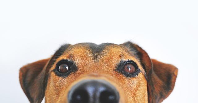 dog-838281_640