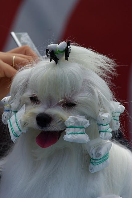 dog-show-733637_640