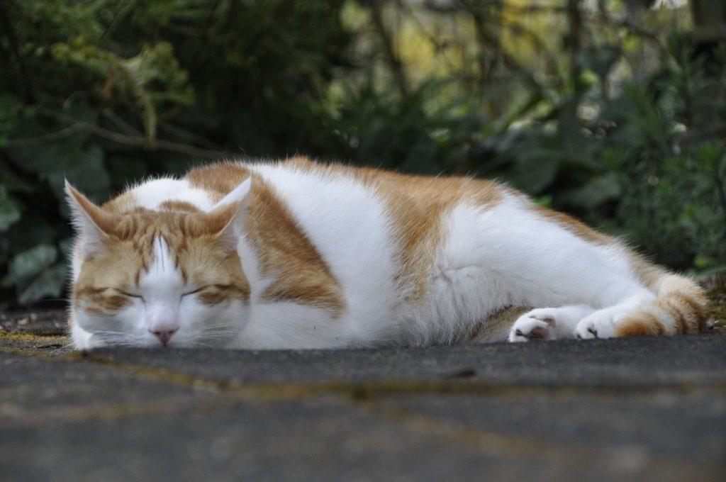 cat-308293_1920