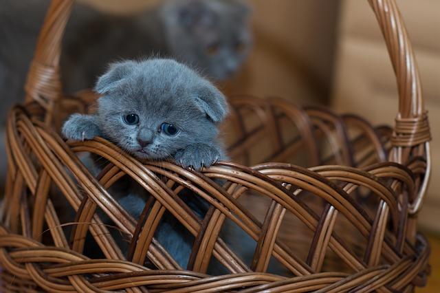adorable-1845789_640