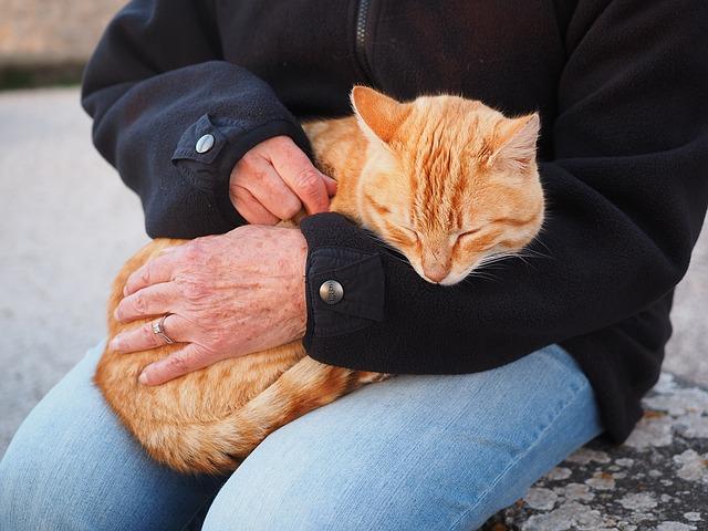 cat-1090145_640