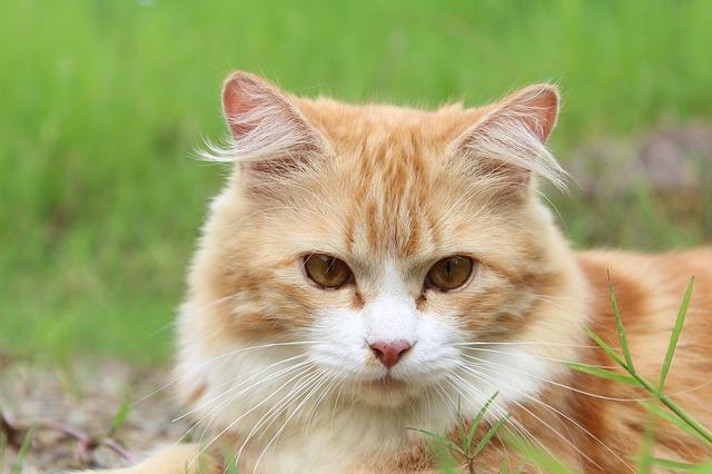 cat-111793_640