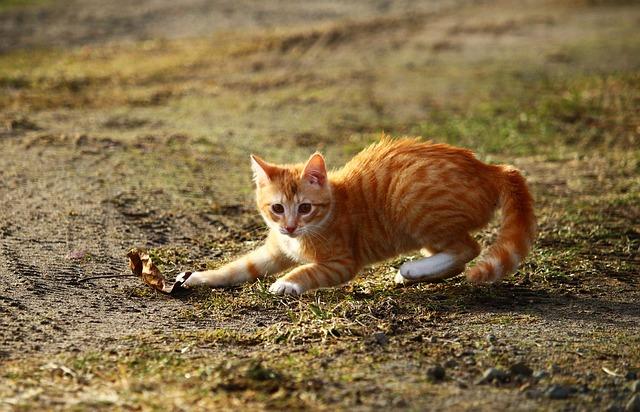cat-1166158_640