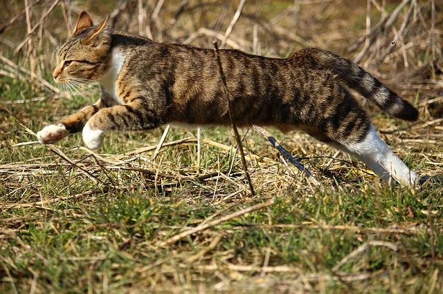 cat-1244593_640