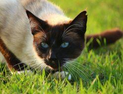 cat-1325494_640