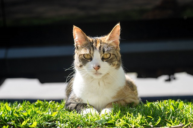 cat-1397342_640