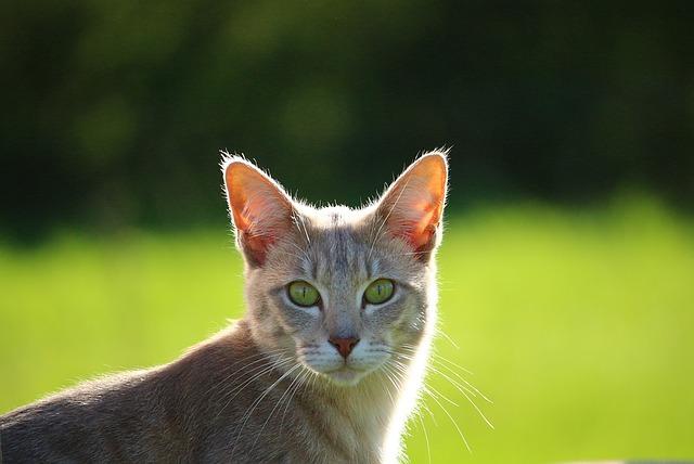 cat-1400581_640