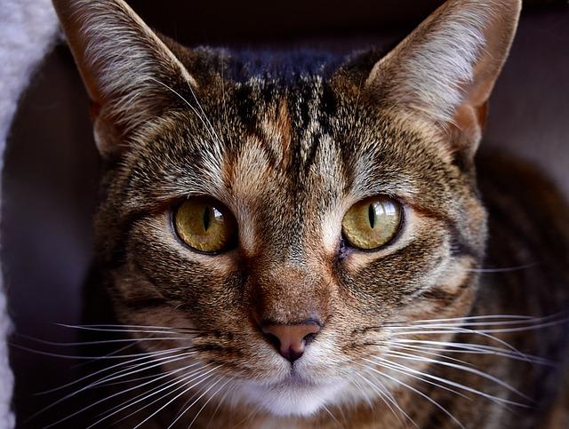 cat-1401637_640