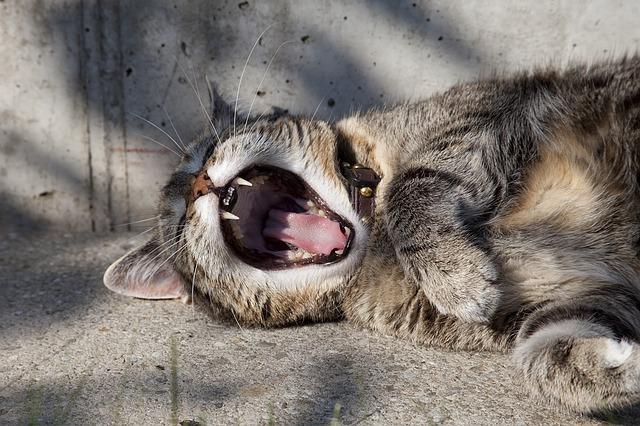 cat-1448873_640