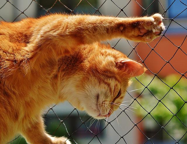 cat-1455463_640