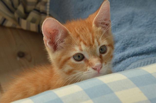 cat-1548586_640