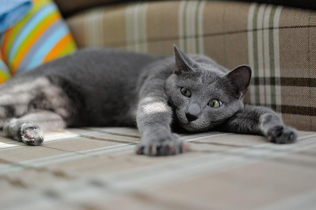 cat-1575265_640