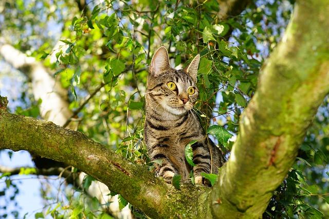 cat-1622001_640 (1)