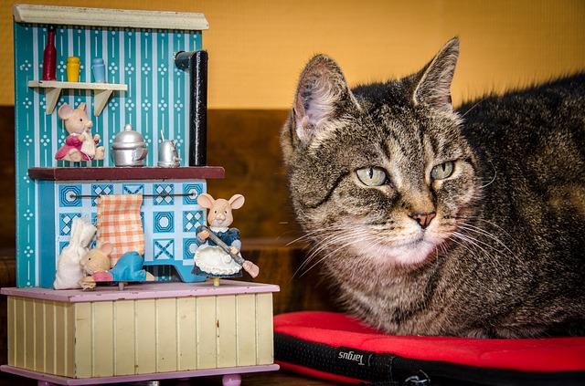 cat-1858974_640