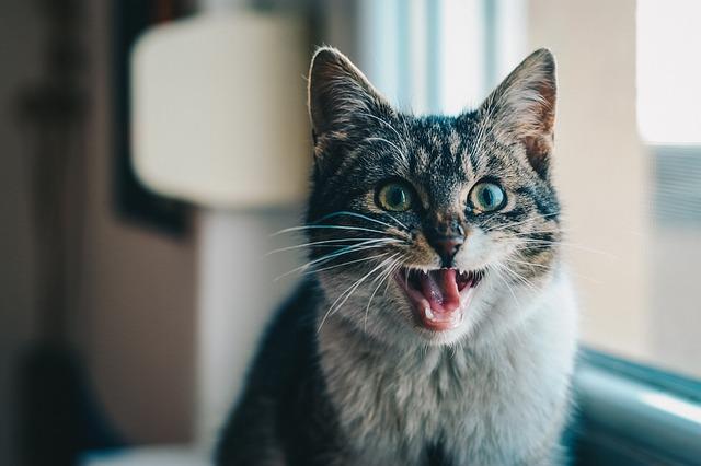 cat-1986499_640