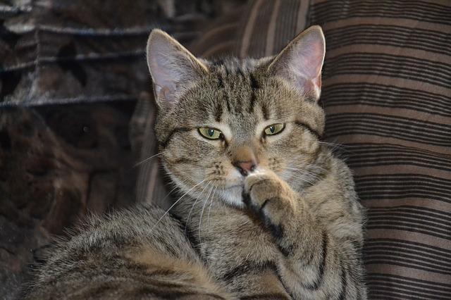 cat-324826_640