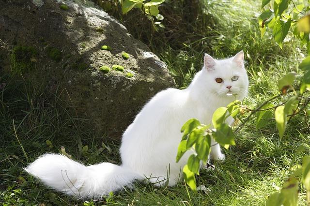cat-83327_640