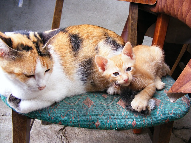 cats-87278_640
