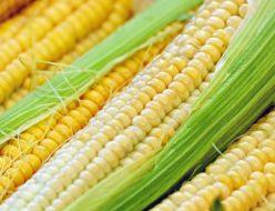 corn-1605664_640