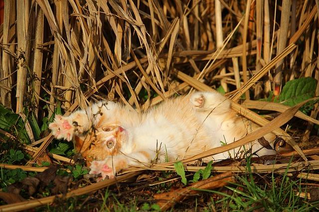kitten-1074904_640