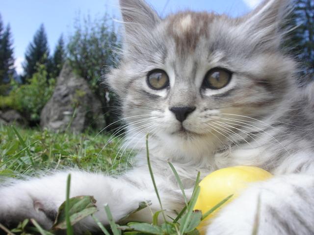 sweet-cats-1-1563062-640x480