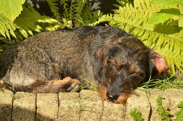 dog-1682907_640
