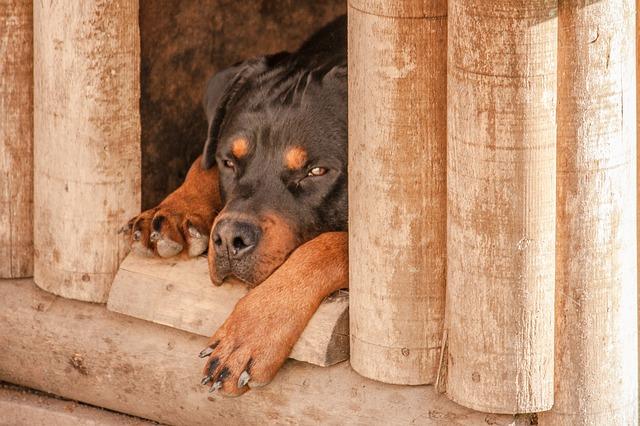 dog-1771878_640