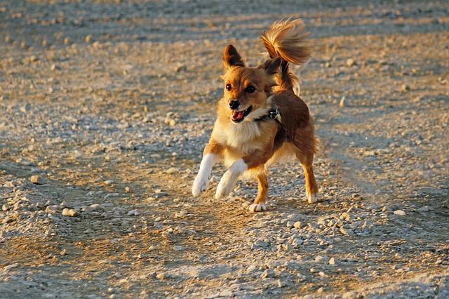 dog-1913265_640