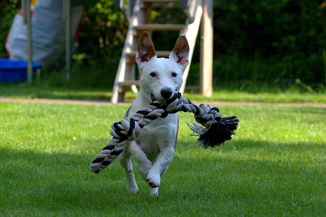 terrier-1497505_640